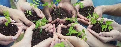 volunteers-planting-vegetables