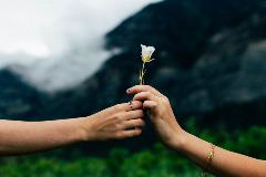 Hands-giving-another-person-a-white-flower