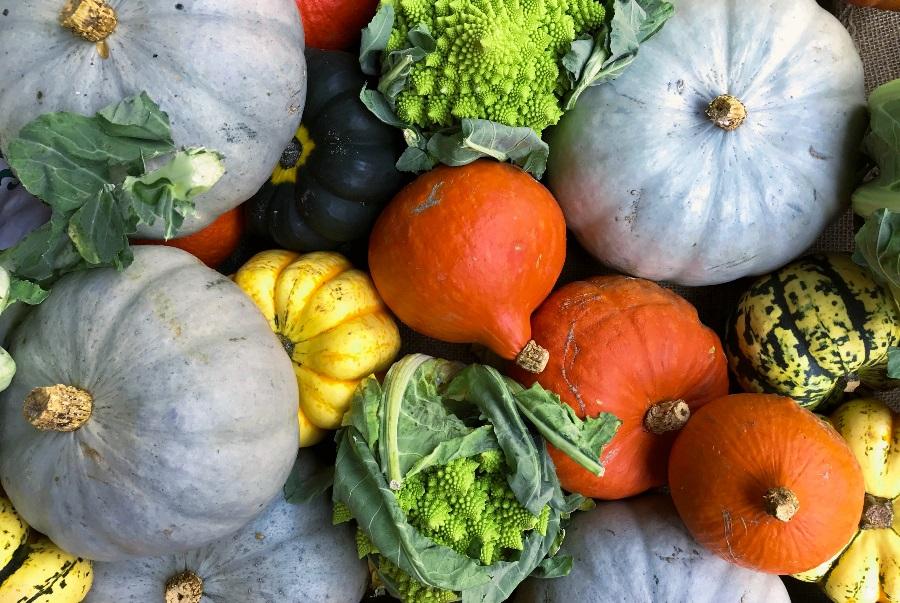Pumpkins-arranged-in-a-display