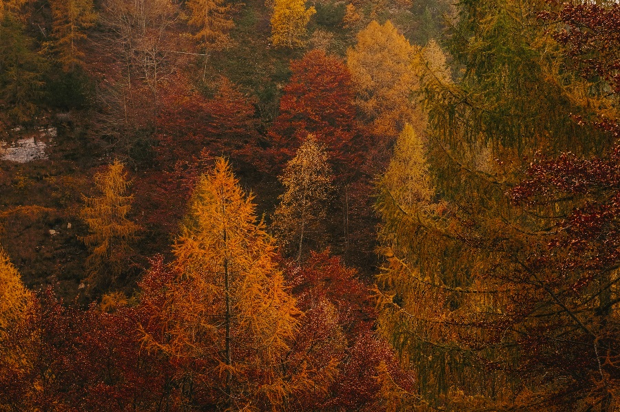 tall-trees-with-fall-colors-fall-travel-trends