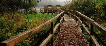 fall_trail_accidental