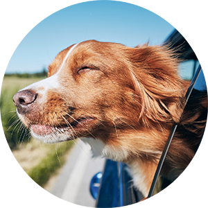 Roadtrip with your dog.