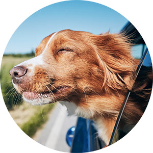 roadtrip with your dog
