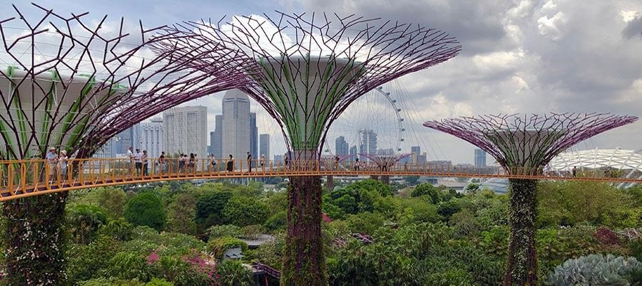 The-Supertree-Grove-in-Singapore
