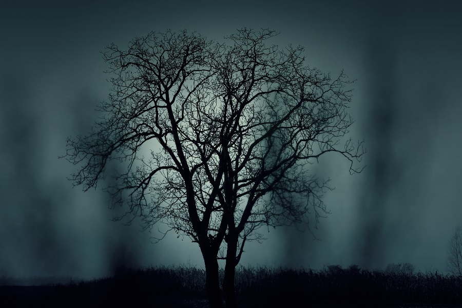 Spooky-looking-tree-with-foggy-night-background