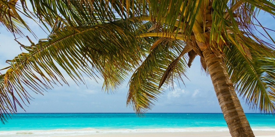 palm-tree-on-a-beach-with-blue-ocean